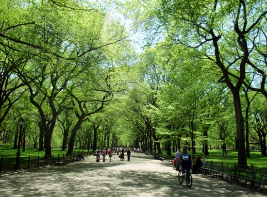 初秋のセントラルパークの巨大な並木道 The Mall_b0007805_21322959.jpg