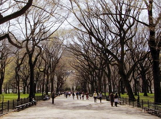 初秋のセントラルパークの巨大な並木道 The Mall_b0007805_2132350.jpg
