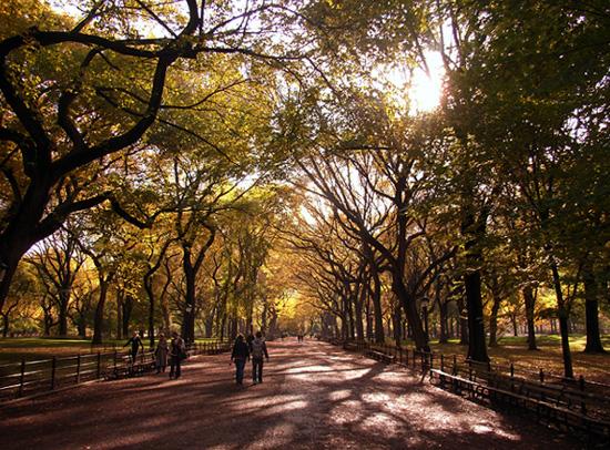 初秋のセントラルパークの巨大な並木道 The Mall_b0007805_21331875.jpg