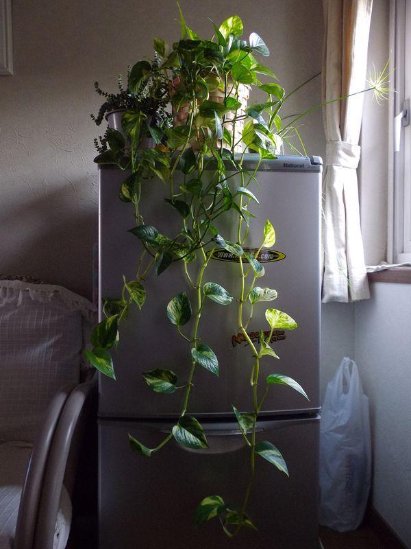 巨大化する植物たち_c0025115_22020781.jpg