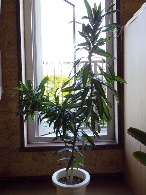 巨大化する植物たち_c0025115_22021247.jpg