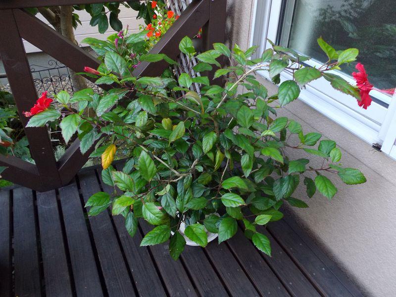 巨大化する植物たち_c0025115_22021606.jpg