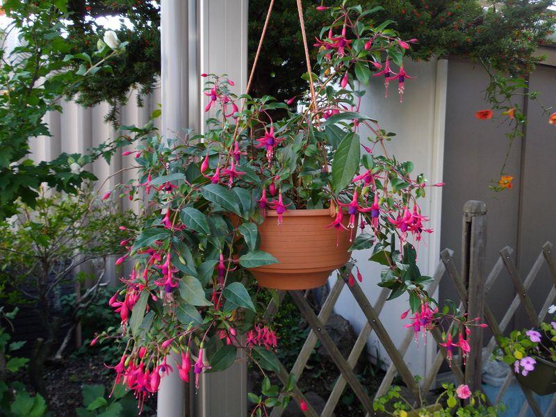 巨大化する植物たち_c0025115_22022402.jpg