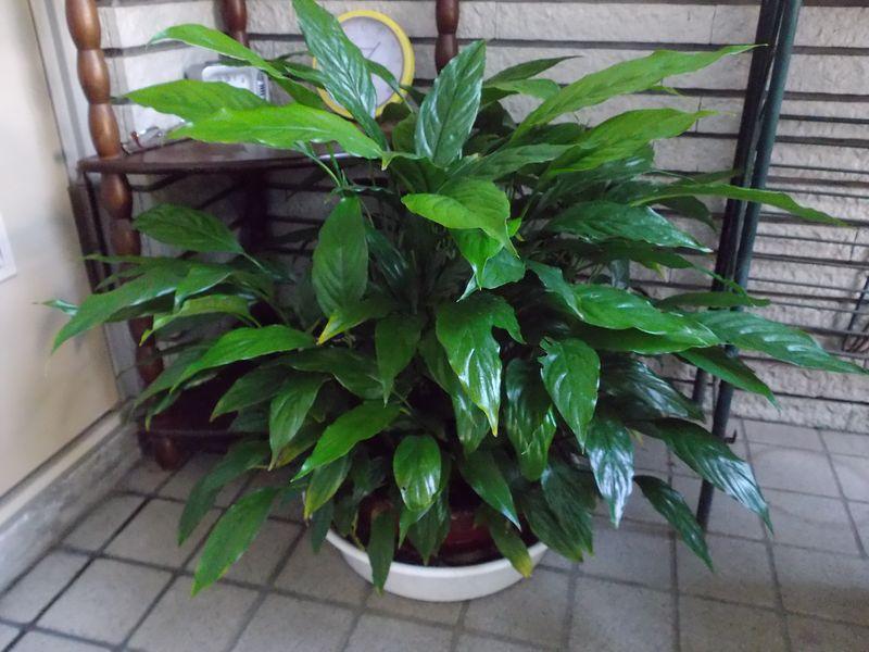 巨大化する植物たち_c0025115_22022941.jpg