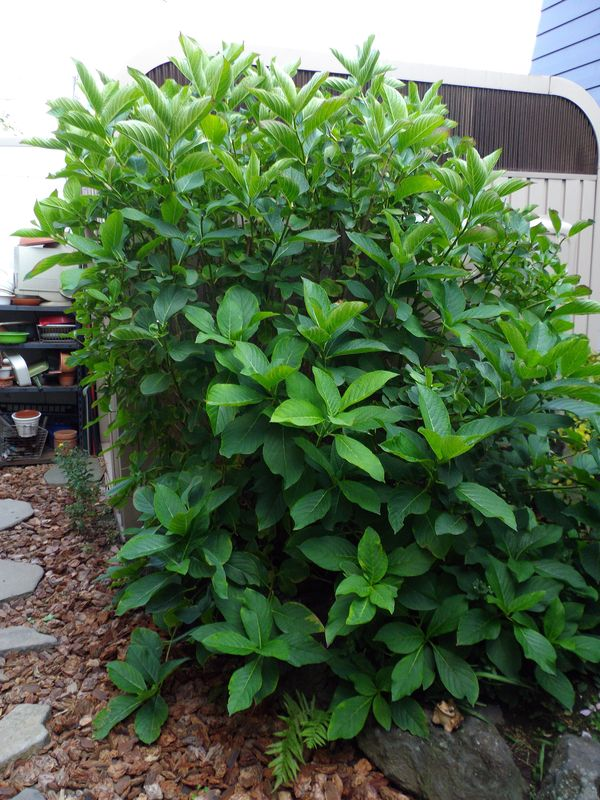 巨大化する植物たち_c0025115_22160095.jpg