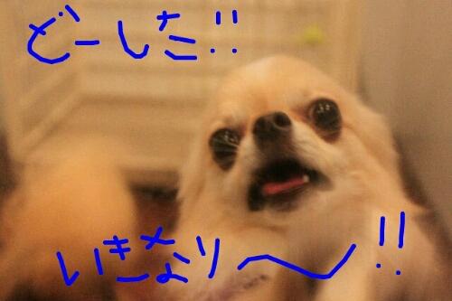 b0130018_11183210.jpg