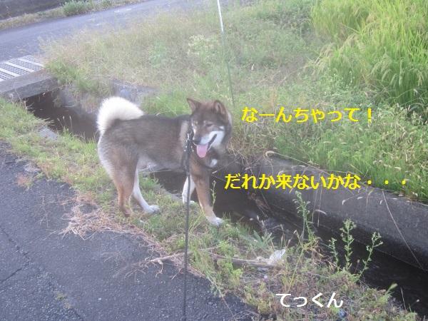 f0143123_1573251.jpg