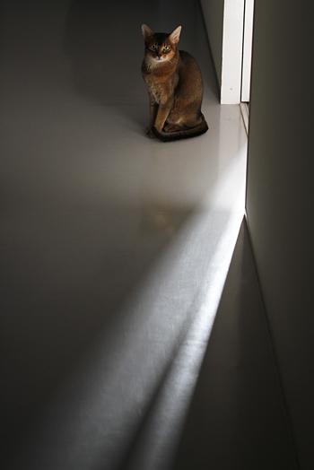 [猫的]Untitled series_e0090124_22424630.jpg