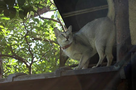 庭で遊ぶ猫_b0199526_11174225.jpg