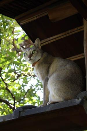 庭で遊ぶ猫_b0199526_11175688.jpg