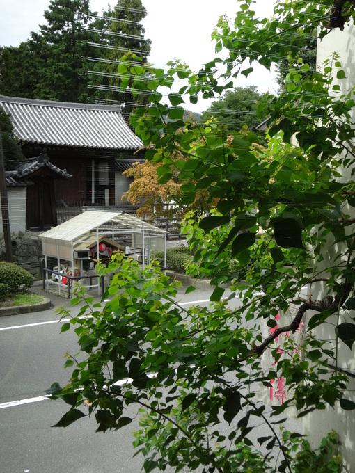 紫野和久傳 「五 いつつ」_c0223630_2423287.jpg