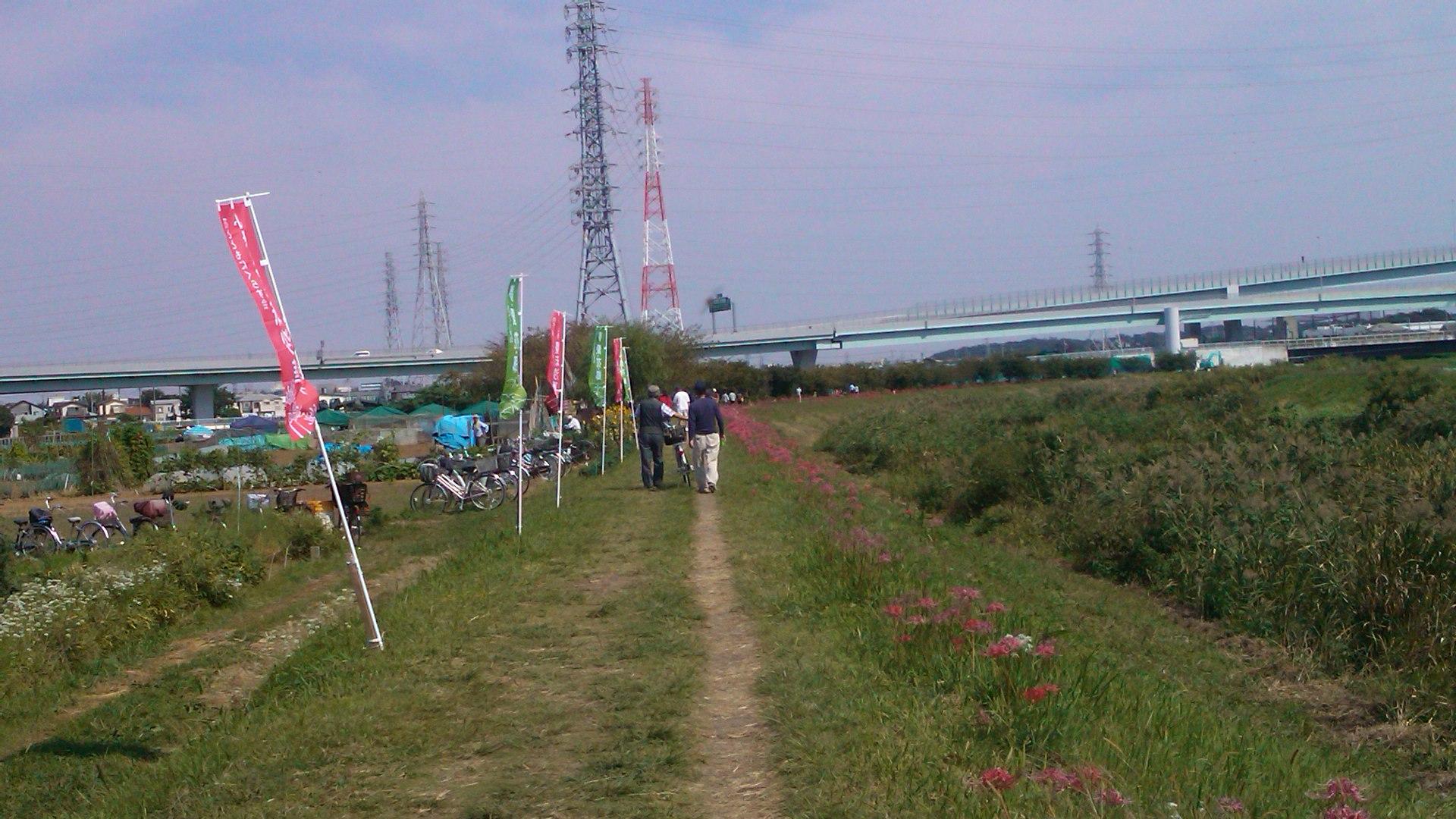 散歩途中で..曼珠沙華まつり_b0137932_1643945.jpg