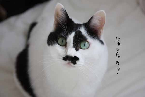 おめでとう!!ぢぢこちゃん!!!(クイズあり)_b0223446_17325519.jpg