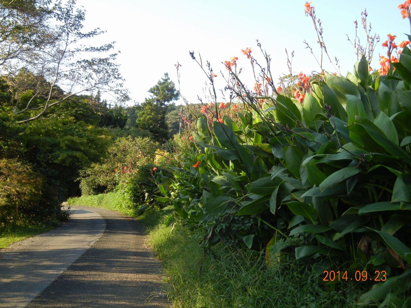 '14,9,23(火)「ファントム」と一人散歩!_f0060461_11311959.jpg