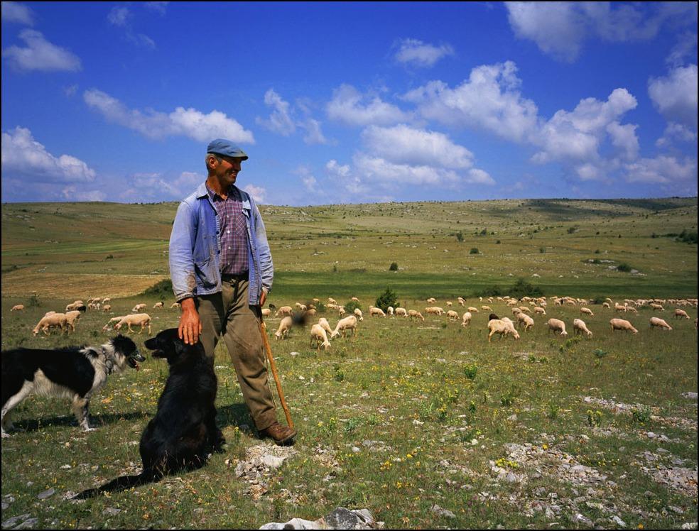 ホロゴンさんの羊飼いと私の羊飼いのおじさんと犬_a0031363_2344369.jpg