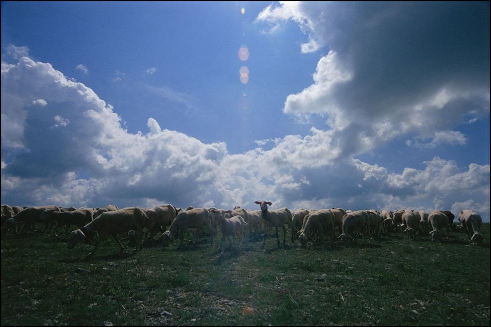 ホロゴンさんの羊飼いと私の羊飼いのおじさんと犬_a0031363_2374246.jpg