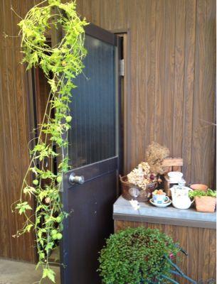 薔薇のグリーンカーテン_e0086864_0462635.jpg