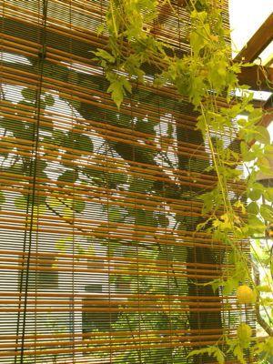 薔薇のグリーンカーテン_e0086864_0462766.jpg