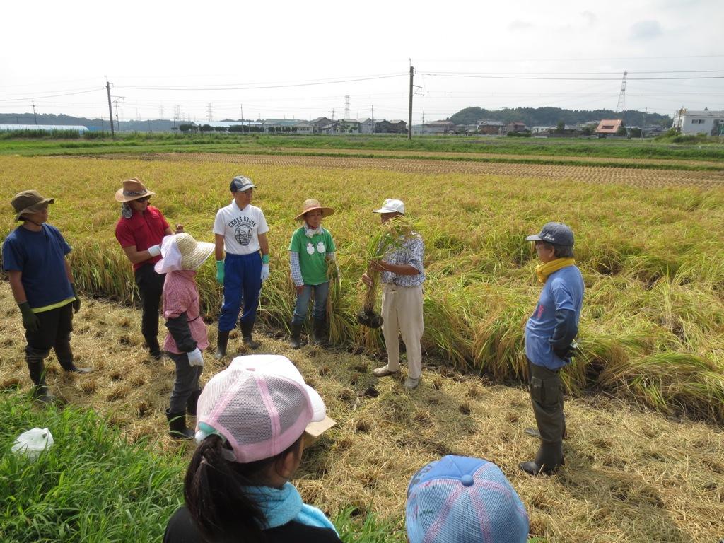 椿農場の稲刈り_c0310571_21142550.jpg