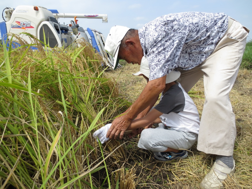 椿農場の稲刈り_c0310571_21184523.jpg