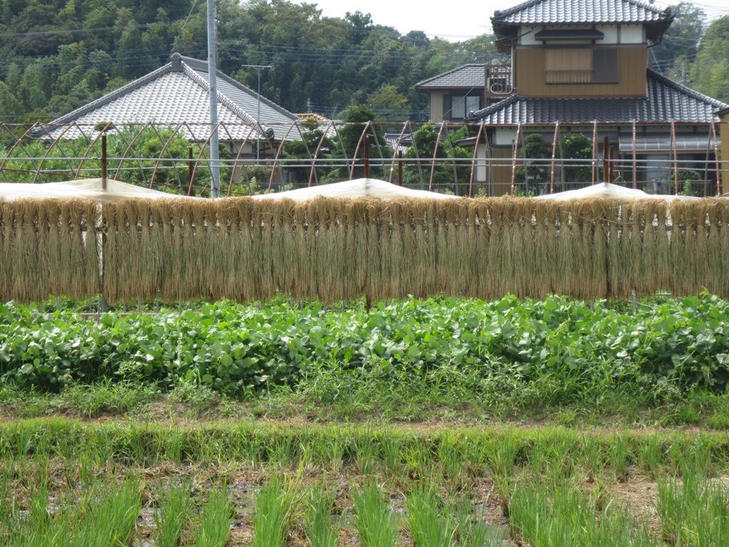 椿農場の稲刈り_c0310571_21334474.jpg