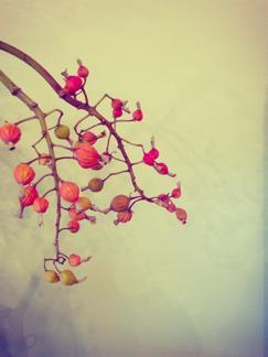 autumn_b0209477_1614072.jpg