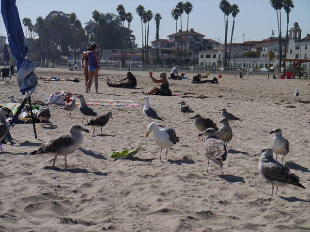 Santa Cruz Beachでのんびり~ 2014.9.12_f0167281_17215958.jpg