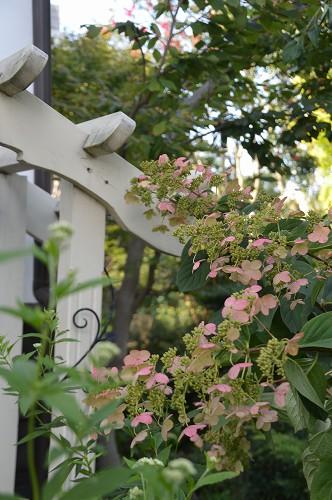 清水工業ガーデンへ SEP.2014_c0124100_01128100.jpg