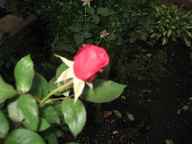 f0325309_18381603.jpg