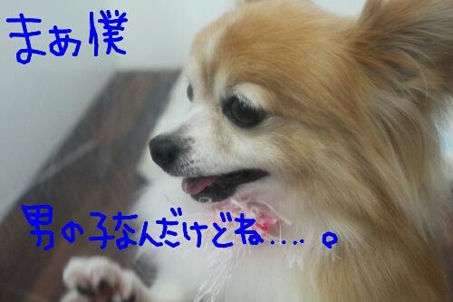 b0130018_11303782.jpg