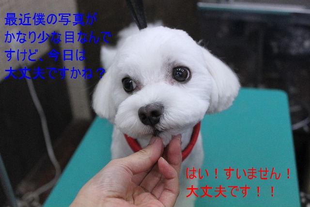 b0130018_1515032.jpg