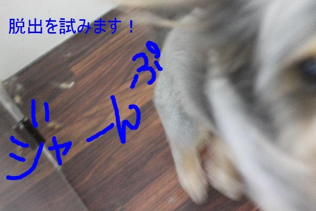 b0130018_15223638.jpg