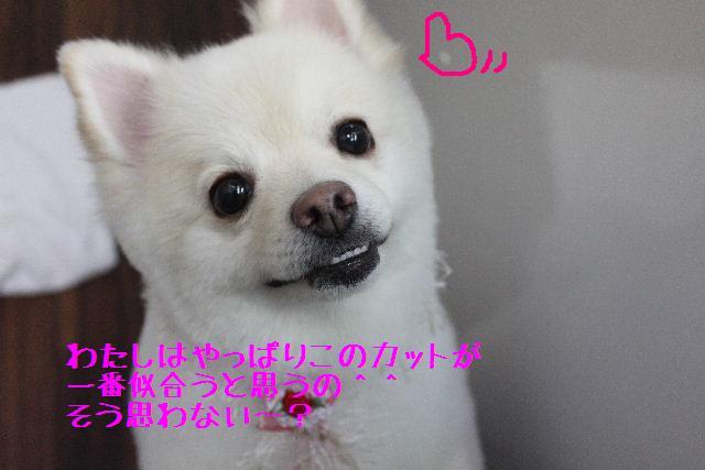 b0130018_16503746.jpg