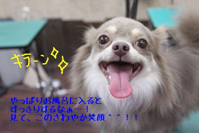 b0130018_1658754.jpg