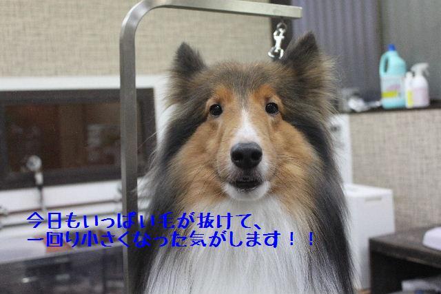 b0130018_170468.jpg