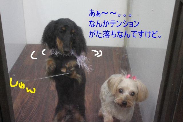 b0130018_938489.jpg