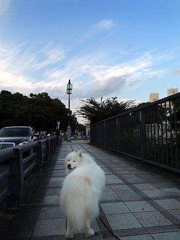 日曜おじ散歩_c0062832_5543765.jpg