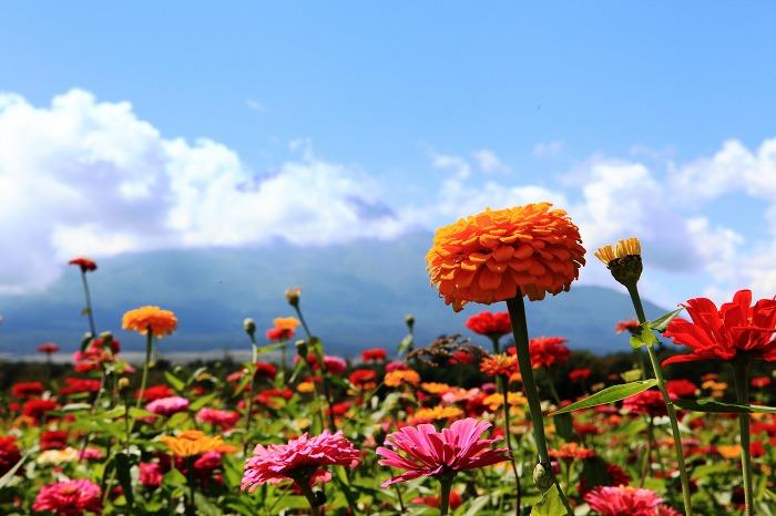 花の都公園_a0294534_20513648.jpg