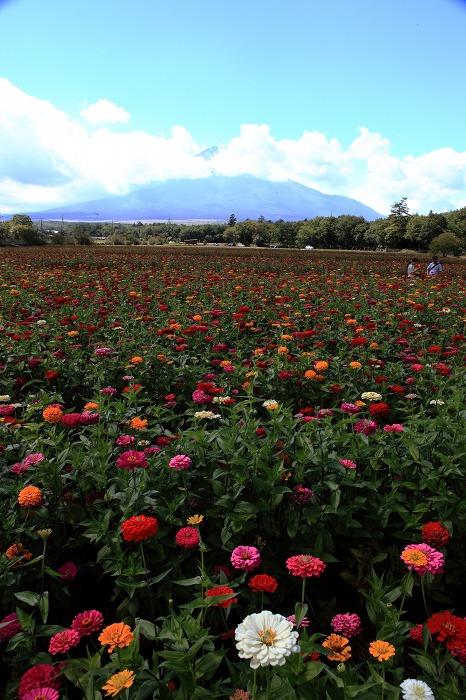 花の都公園_a0294534_20531532.jpg