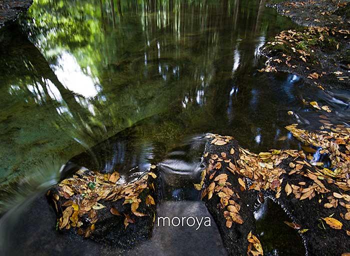 渓流も秋の気配_c0085877_06554900.jpg