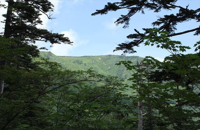 ハクサンコザクラ咲く会津駒ケ岳へ その1_b0246693_11472053.jpg
