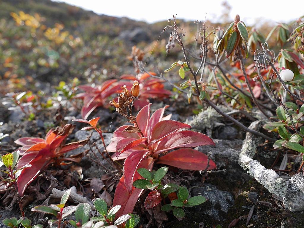 紋別岳、風不死岳と樽前山、9月24日-速報版-_f0138096_1612577.jpg