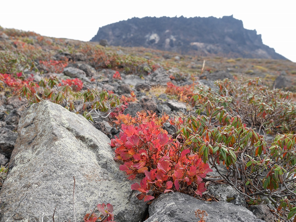 紋別岳、風不死岳と樽前山、9月24日-速報版-_f0138096_1615886.jpg