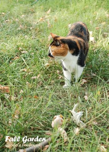 秋模様になってきた裏庭の様子_b0253205_05262813.jpg
