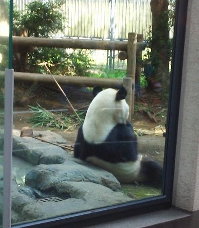上野動物公園_a0139334_12485719.jpg