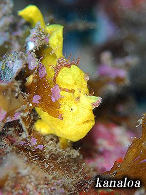 もっと撮りたい!幼魚はやっぱり可愛いなあ・・・(^.^)_b0189640_178109.jpg