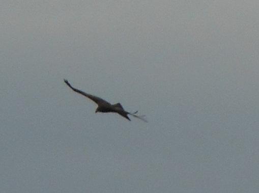 魚鷹が飛ぶ海_e0175370_1022978.jpg
