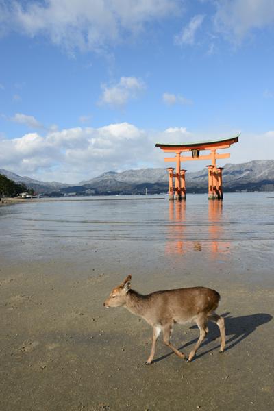 厳島神社写真_e0171573_1846409.jpg