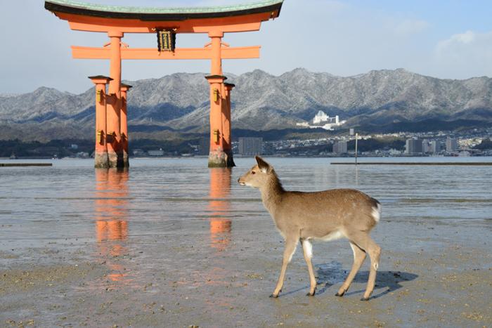 厳島神社写真_e0171573_1847412.jpg