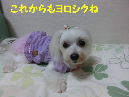 b0193480_21312668.jpg